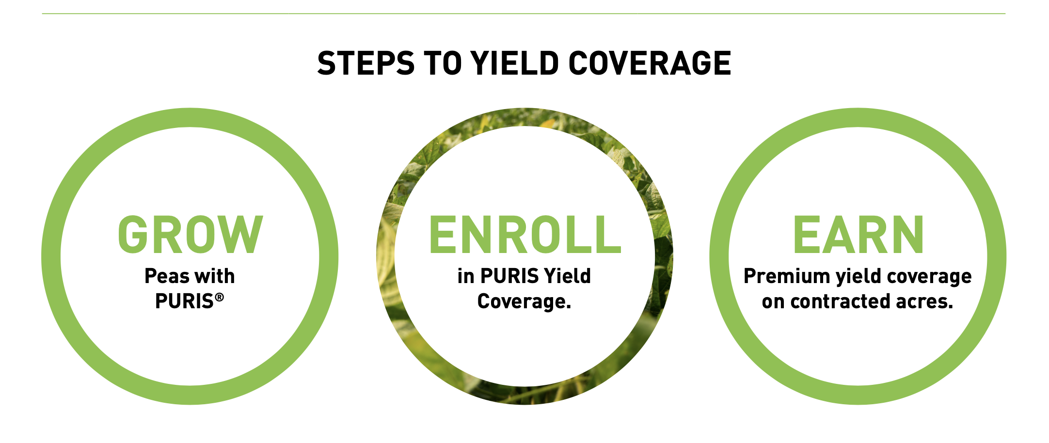 Grow, Enroll, and Earn with PURIS Crop Coverage