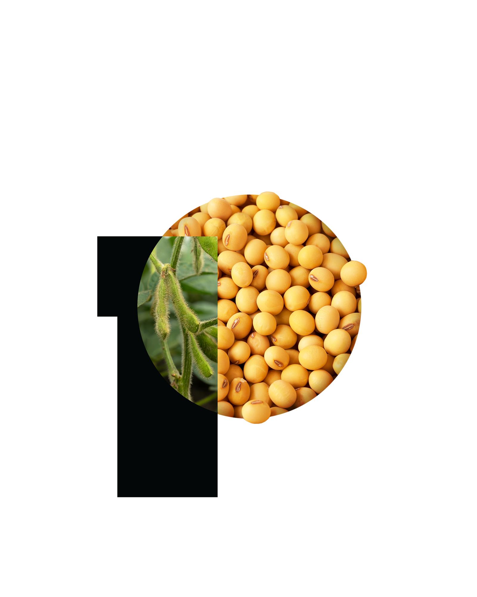 PURIS P soyseed